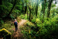 Hiking in Nepal jungle forest Royalty Free Stock Photography