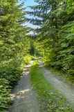 A hiking and off road path meanders along a mountain meadow on a. Sunny day. Hiking and traveling views near Mount Rainier in Washington over the summer Royalty Free Stock Image