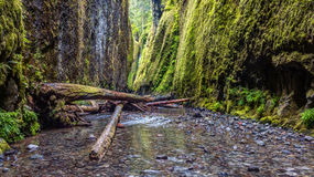 Hiking Oneonta Gorge. Hiking in the beautifully lush Oneonta Gorge, Oregon stock photography