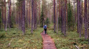 Hiking. Through Oulanka national park in Finland Stock Photo