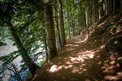 Hiking parh in the old forest. Royalty Free Stock Photo