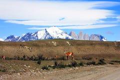 Hiking Patagonia royalty free stock photos