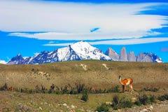 Hiking Patagonia Royalty Free Stock Images