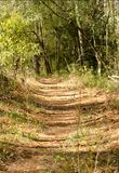 Hiking path. Trail going through the woods Stock Images