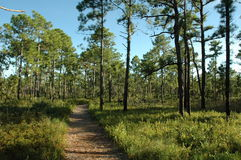 Hiking Path. Through coastal forest Stock Photo