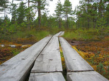 Hiking path. Wooden hiking path over wet terrain Royalty Free Stock Image
