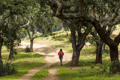 Hiking path alentejo with person Royalty Free Stock Photos