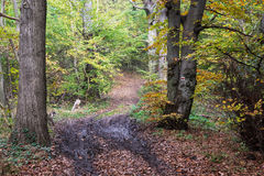 Hiking path in the autumn deciduous forest Royalty Free Stock Image