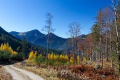 Autumn forest in Allgäu. Hiking path in the autumn forest in Allgäu, Bavaria, Germany Stock Images