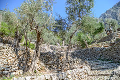 Hiking path in the beautiful nature of mallorca Royalty Free Stock Photography