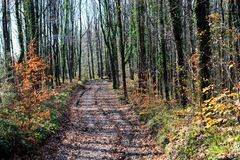 Hiking path in woods landscape in forest royalty free stock images