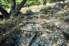 Hiking path in the deciduous forest, roots and stones Royalty Free Stock Photos