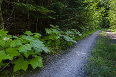A hiking path and dirt road meanders along a mountain meadow in. The shade. Hiking and traveling views near Mount Rainier in Washington over the summer Royalty Free Stock Images
