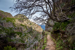 Hiking path on the edge of a rocky cliff near the Pico Ruivo mountain at Madeira. Royalty Free Stock Image