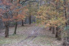 Hiking path through fall colored hemlocks royalty free stock photos