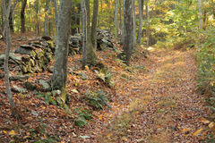 Hiking Path in Fall Woods Royalty Free Stock Image