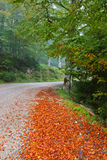 Hiking path in the forest during Autumn Stock Photo