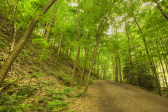 Hiking Path Stock Images