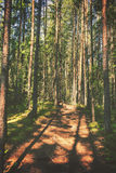 Hiking path. Through forest, vintage editing style Royalty Free Stock Image