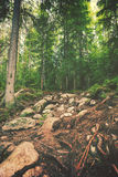 Hiking path Royalty Free Stock Photo