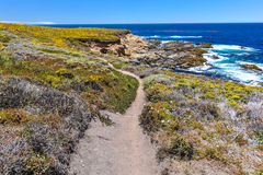 Hiking path in Garrapata State Park by Pacific Royalty Free Stock Photos