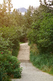 Hiking path in green forest Royalty Free Stock Photography