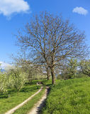Hiking path through green rural spring landscape Royalty Free Stock Images
