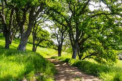 Hiking path on the hills of the newly opened Rancho San Vicente Open Space Preserve, part of Calero County Park, Santa Clara royalty free stock image