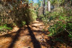 Free Hiking Path In The East Texas Piney Woods Stock Images - 142726394