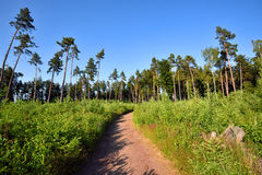 Hiking path leading through green forest Stock Image