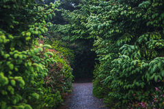 Hiking path leading to a forest. Royalty Free Stock Photo