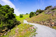 Hiking path lined up with wildflowers, Rancho San Vicente Open Space Preserve, part of Calero County Park, Santa Clara county,. South San Francisco bay area royalty free stock photography