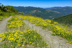A hiking path meanders along a mountain meadow on a sunny day. Hiking and traveling views near Mount Rainier in Washington over the summer Royalty Free Stock Photo