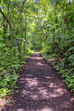 Hiking Path. In the middle  of dense tropical jungle Stock Photos