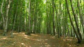 Hiking path. In national park Jasmund Stock Image