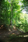 Hiking path. In national park Jasmund Royalty Free Stock Images