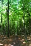 Hiking path. In national park Jasmund Stock Photo