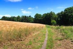 Hiking path next to grain field in Saxon Switzerland Royalty Free Stock Photo