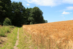 Hiking path next to grain field in Saxon Switzerland Stock Images
