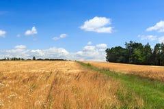 Hiking path next to grain field in Saxon Switzerland Royalty Free Stock Photos