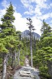 Summer Hiking In Alaska Stock Photos