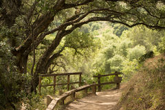 Hiking path with overgrown trees in California. Green trees overgrowing the california hiking trail Royalty Free Stock Images