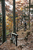 Hiking path with railing in the autumn deciduous forest, vertica Stock Photography