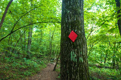 Hiking path Red Trail in Forest Royalty Free Stock Photography