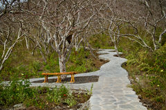 Hiking path in San Cristobal Island, Galapagos Royalty Free Stock Photography