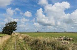 Hiking Path with Sheep Stock Image
