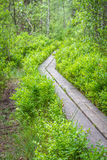 Hiking  path someplace in Sweden Royalty Free Stock Photos