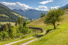 Hiking path in South Tyrol Royalty Free Stock Photo