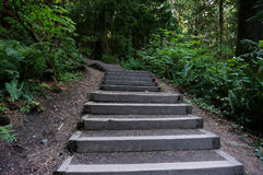 Hiking Path. Stairs in a forest leading up a trail Royalty Free Stock Image