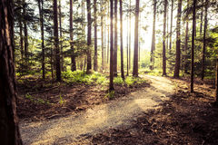 Hiking path and sunset in beautiful woods Stock Photo